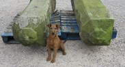 Showing the pair of antique stone posts ready for collection on pallets - and Rolo!