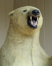 Boris The Antique Victorian Polar Bear