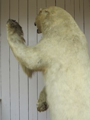 Example of Rowlands Ward - Bear on a Oak Plinth