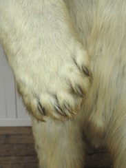 Full Size Victorian Polar Bears To Buy From UKAA