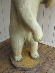 Stuffed Antique Victorian Polar Bear
