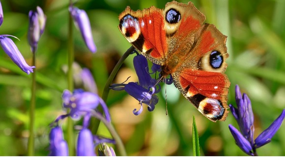 UKAA spring bank holiday hours flowers butterfly
